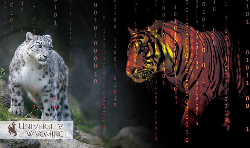 AI to the Rescue of Wildlife
