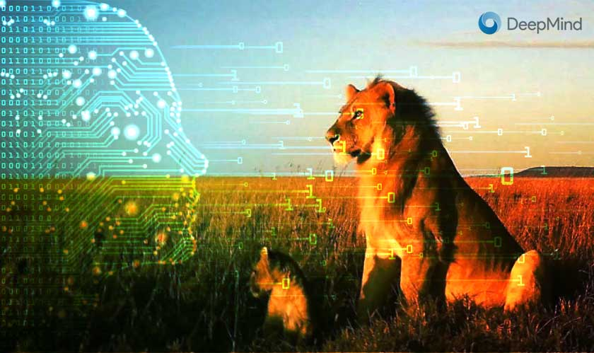 it services deepmind ai to help wildlife