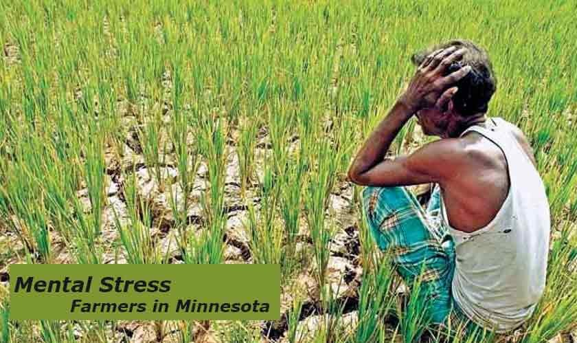Drought leading to mental stress to the farmers in Minnesota