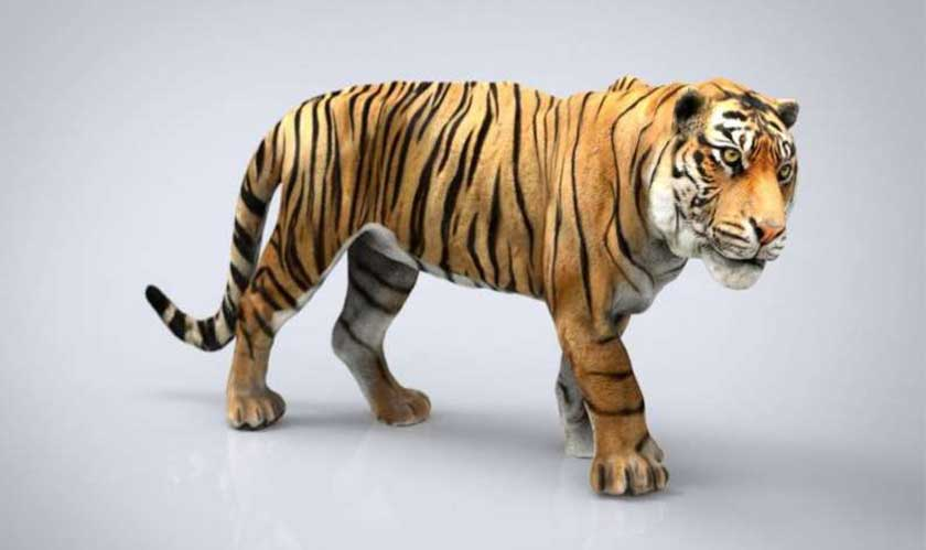 Google 3D animals feature is the new tool to keep your kids occupied during isolation