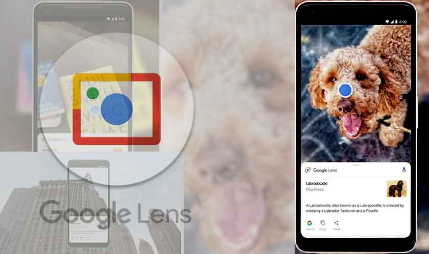 google lens recognizes many things