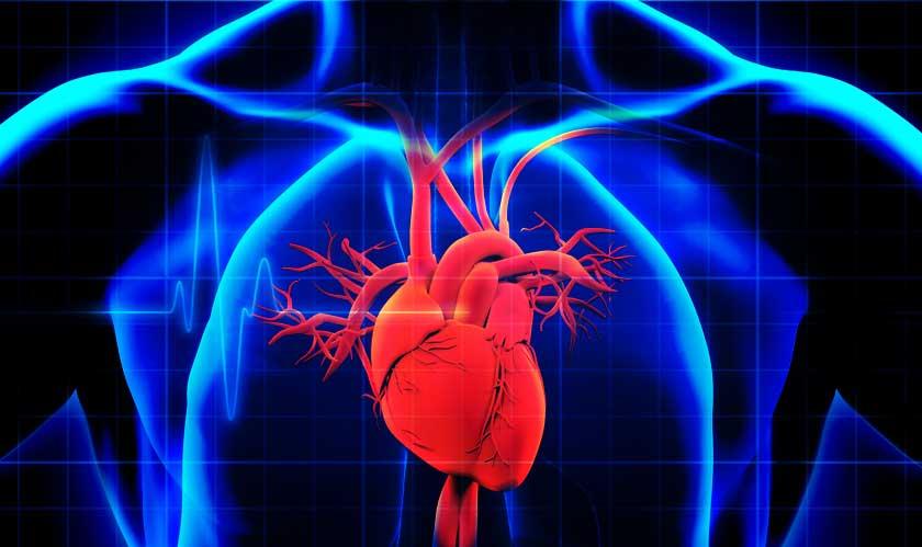 ml system predict cardiovascular death