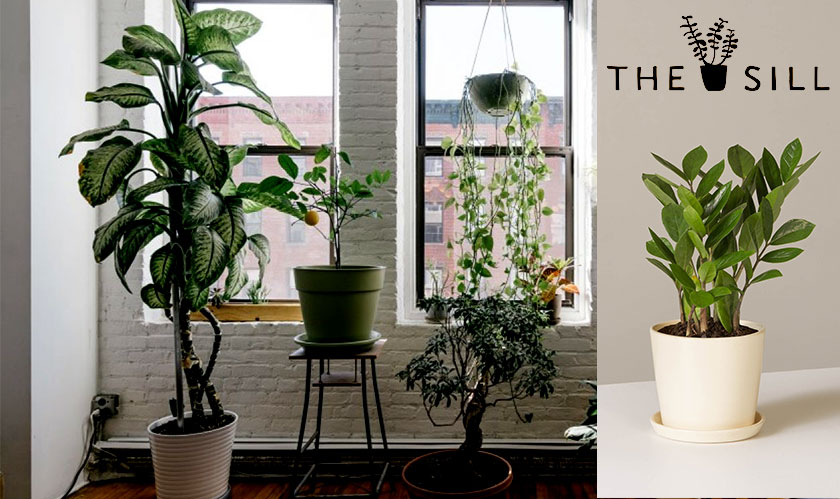 The Sill raises $5 Million in series A funding