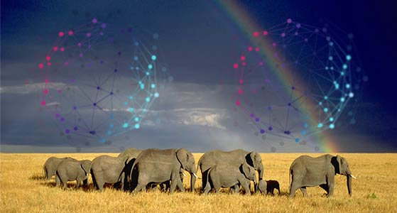 Wildlife on the wane; big data to the rescue